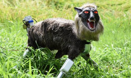 Japanese 'monster wolf' robot